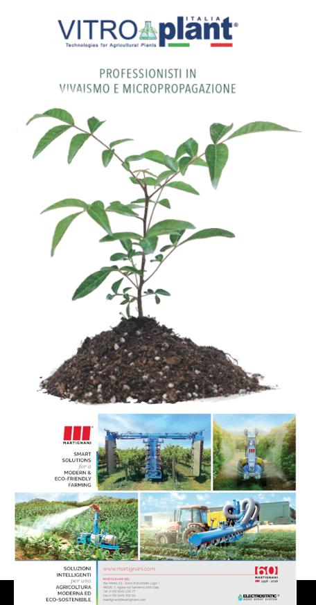 Catalogo Vitroplant